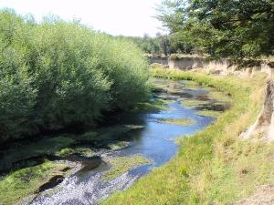 rio pico