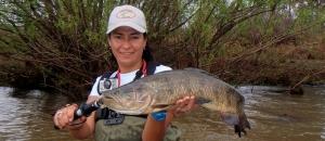 Wolf Fish LSA