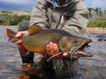 trophy brooktrout
