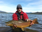 brown trout latitudsuranglers