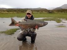 chinook salmon latitud sur anglers