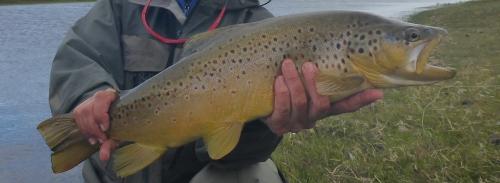 rio gallegos campfishing